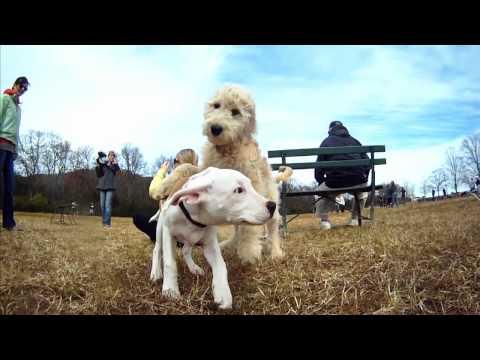una bellissima giornata da cani