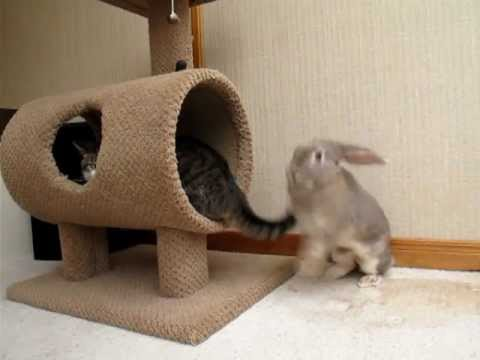兔子與貓尾巴的戰鬥