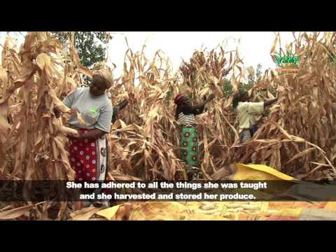 The Grain hub - Storing Hope for a Brighter Future