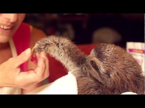 Kärvänlig sengångare