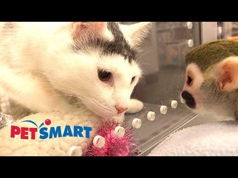 Baby Monkey Visits Pet Smart #MonkeyBooCrew #babymonkey