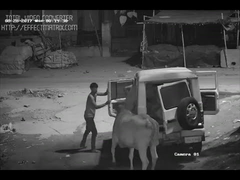 FAZILPUR 28 08 17 cow Thief 1