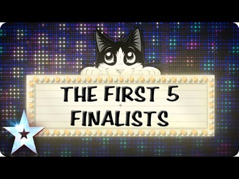 Mews-flash! It's Britain's Cleverest Cat semi-finalists | Britain's Got Talent 2014