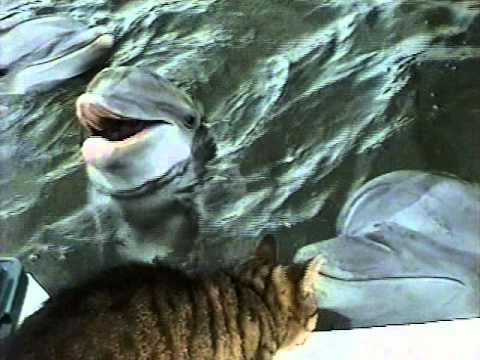 Delfiner bekantar sig med en katt