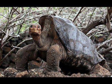 Chú rùa 100 tuổi lên kế hoạch chuyển nhà