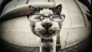 FUNNY VIDEOS: Funny Cats - Smart Cat Videos - Top Funny Cats Compilation - Funny Animals