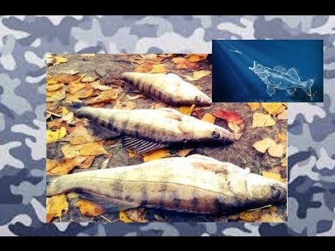 Рыбалка на нижней волге весной, ловля судака и сома