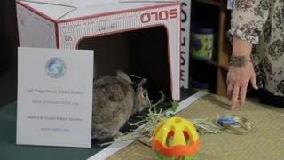Rabbits in a Hutch vs. Indoors : Rabbit Care