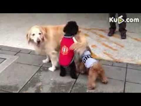 سكس بشر مع حيوانات