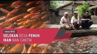 Video Selokan Desa Penuh Ikan Nan Cantik MP3, 3GP, MP4, WEBM, AVI, FLV Februari 2019
