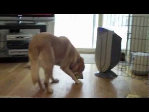 當這隻狗狗一口氣咬了3顆球並抬頭時,我飯都噴出來了!