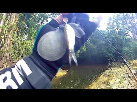 Video Casting ikan kecil dengan lure mini l Micro lure part 1 download in MP3, 3GP, MP4, WEBM, AVI, FLV January 2017