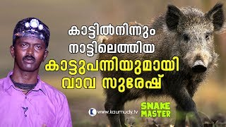 OMG! Vava Suresh with a wild boar that came out from the wild | Vava Suresh | Snakemaster