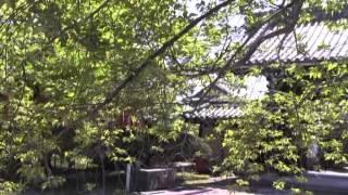 新緑の候・妙国山興禅寺・陽光そそぐ若葉のお庭