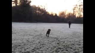 Dobby running