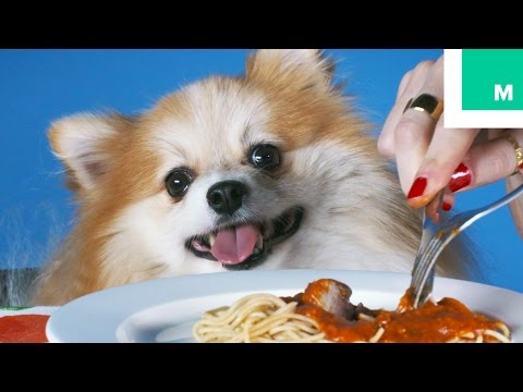 Dogs Eat Dinner with Their Humans