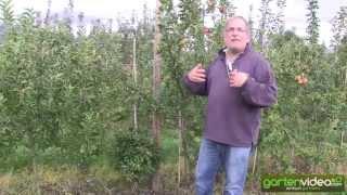 #1354 Maloni Züchtung - Apfelzüchtung für Miniäpfel
