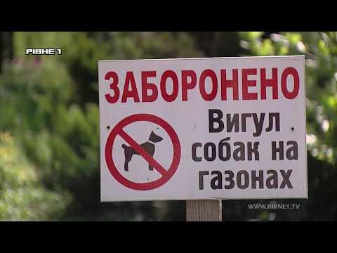 Прощай, собаче лайно: у Рівному готуються прибирати за псами [ВІДЕО]