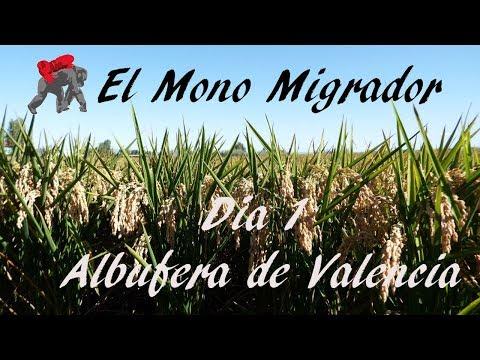 EL MONO MIGRADOR/ ESPAÑA DÍA1/ Comenzamos!!!!