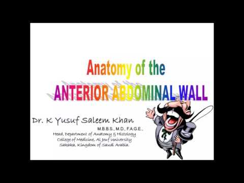 Anatomy of INGUINAL CANAL, INGUINAL HERNIAS & ANTERIOR ABDOMINAL WALL (Complete)