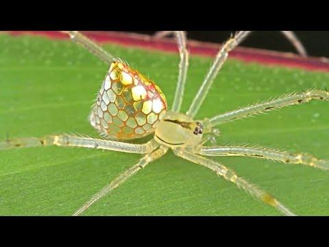 почему паука нельзя назвать насекомым