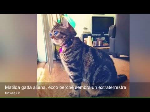 matilda gatta aliena, ecco perché sembra un extraterrestre