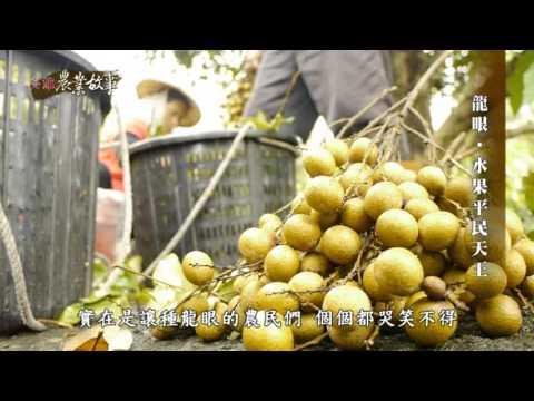 農業故事館-龍眼