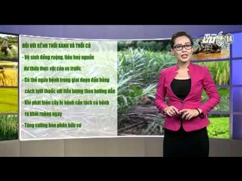 Thời tiết Nông vụ_19.09.2014