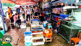 Guangzhou Aquarium Fish Market - Aquarium Co-Op by Aquarium Co-Op