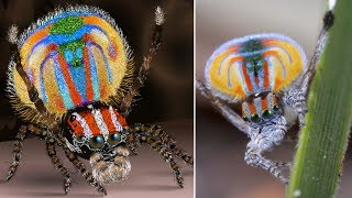 Most BEAUTIFUL Animals in the World by Epic Wildlife