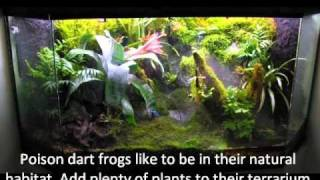 How to keep poison dart frogs (Part 1): The Enclosure