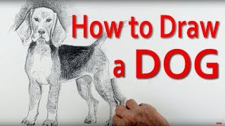 In this art tutorial I explain, step by step how to draw a beagle type dog beginning with very simple shapes. You will earn how to use the head as a measure to get the dog's proportions just right. I'll teach you how to make the outline sketch of the dog look convincing and how to apply light and shade.You will learn how to use the shading to create edges rather than outlines to make your dog look much more three dimensional. The video is aimed at beginners and children who want to learn to draw a beagle and those with more experience of drawing who want to extend their drawing skills.Check out: http://www.art-tutorialsonline.com for more great free art tutorials