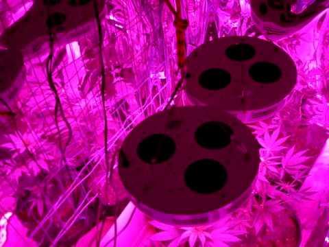 LED grow lights, 90 watt UFO,medical Marijuana ,High pressure sodium,indoors growing,howto