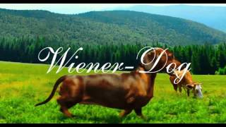 Nonton Eric William Morris/Marc Shaiman - The Ballad of Wiener-Dog (from the Wiener-Dog OST) Film Subtitle Indonesia Streaming Movie Download