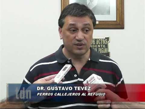 Int. Tevez – Tema perros parte 1/2