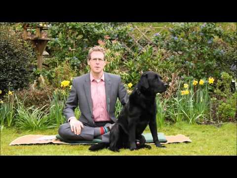 For a happier life adopt 'dog consciousness'
