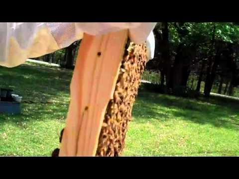 RicsBees Backyard Beekeeping Hive 1 brood chamber frame 7