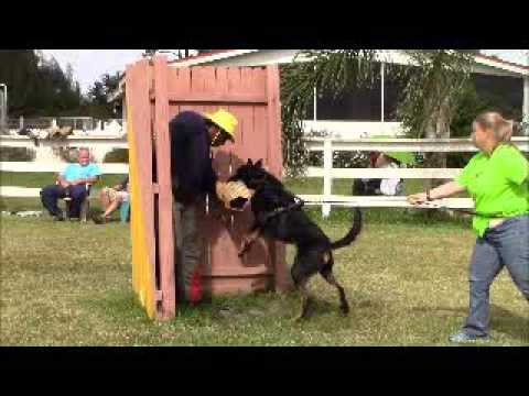 ARC Beaucerons - Luke in protection