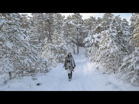 Loch Morlich and Glenmore Forest Park in Snow (Winter in Aviemore Cairngorms) (видео)
