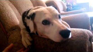 """Если вам предстоит перевоз животного, то необходимо подготовить документы, сделать прививки и проч. Что еще нужно для перевоза кошки или собаки?Говорит ЭКСПЕРТМария Крючкова, врач ветеринарной клиники """"Собачья жизнь"""", тел. (812) 309-54-75,http://dog-life.com/vetclinica contact@dog-life.comvet@dog-life.cominfo@dog-life.comКакие Документы Нужны для Перевоза Кошки или Собаки? Перевоз Животного.  Говорит ЭКСПЕРТВидеожурнал """"Говорит ЭКСПЕРТ"""" http://govoritexpert.ru"""