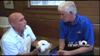 Pet Connection Extra - How To Muzzle Your Dog