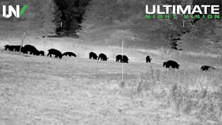 Video Thermal Hog and Predator Hunting | 50 Hogs and 9 Coyotes Down MP3, 3GP, MP4, WEBM, AVI, FLV Maret 2019