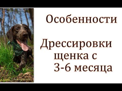 Смотреть онлайн: Дрессировка щенка от 3-6 месяцев