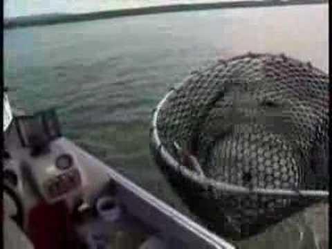 La pêche au doré sous le Pont de Québec