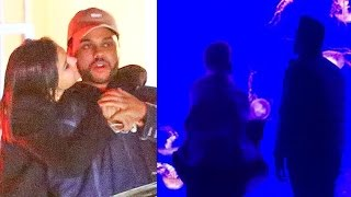Selena Gomez & The Weeknd Go On ADORABLE Date At Aquarium & Selena Files To Trademark Her Name