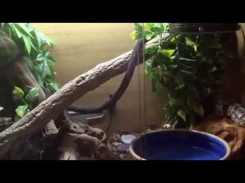 HOW TO SETUP A ROYAL PYTHON VIVARIUM