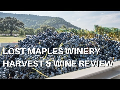 Lost Maples Winery Grape Harvest and Wine Review
