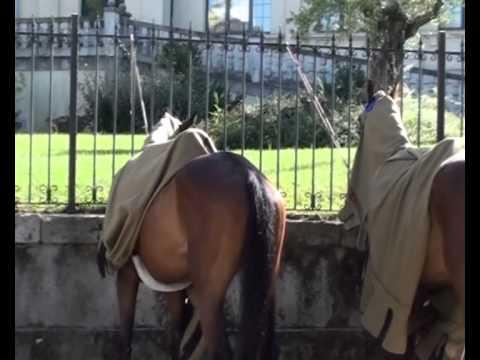 Doma de caballos (I) - XI Mercado Medieval
