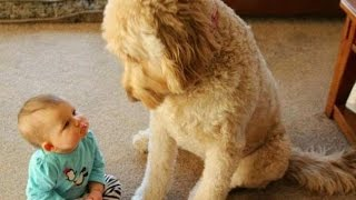 Video FUN CHALLENGE: Try NOT to laugh - Funny & cute dogs and kids MP3, 3GP, MP4, WEBM, AVI, FLV Maret 2019