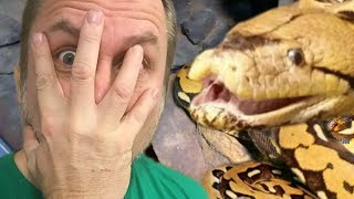 YOU WON'T BELIEVE WHAT MY GIANT SNAKE (Lucy) DID??!!??   BRIAN BARCZYK by Brian Barczyk